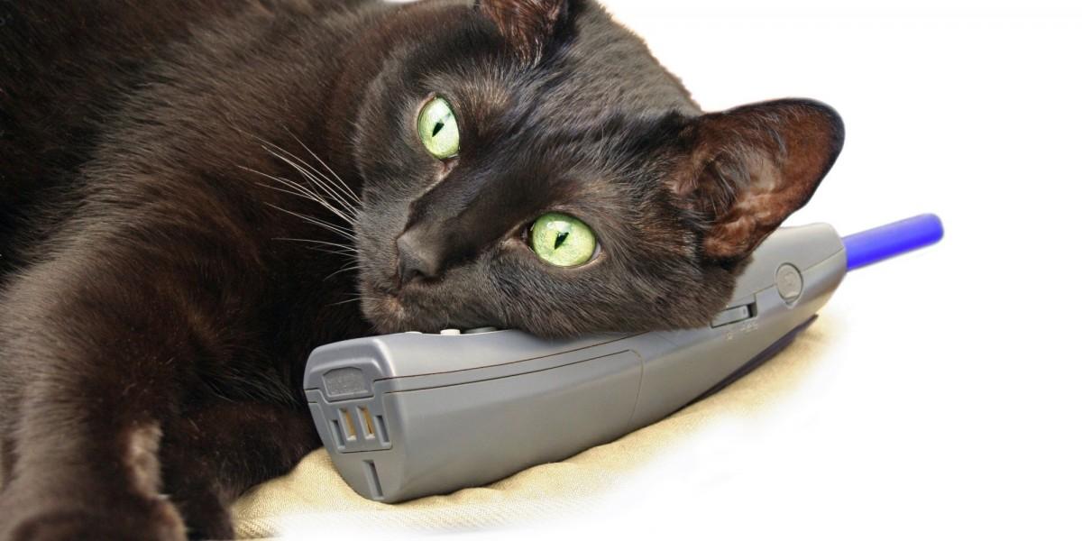 Картинки, кот и телефон картинки приколы